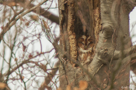 Southam & District Tawny Owl Project update