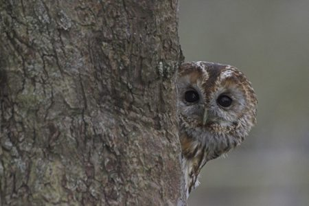Own a Tawny Owl nest box?
