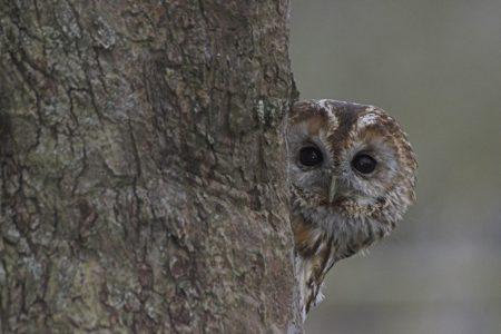 Own a Tawny Owl nest box?