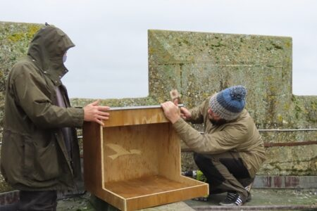 A collaboration for Cirencester Peregrines